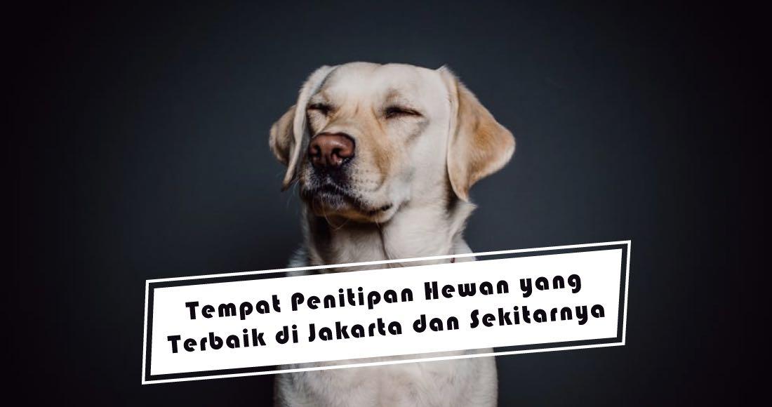 Tempat Penitipan Hewan yang Terbaik di Jakarta dan Sekitarnya