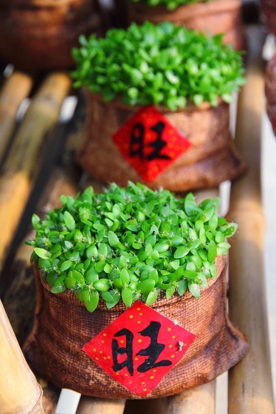 Important-CNY-gif-venuerific-blog-decoration-plant