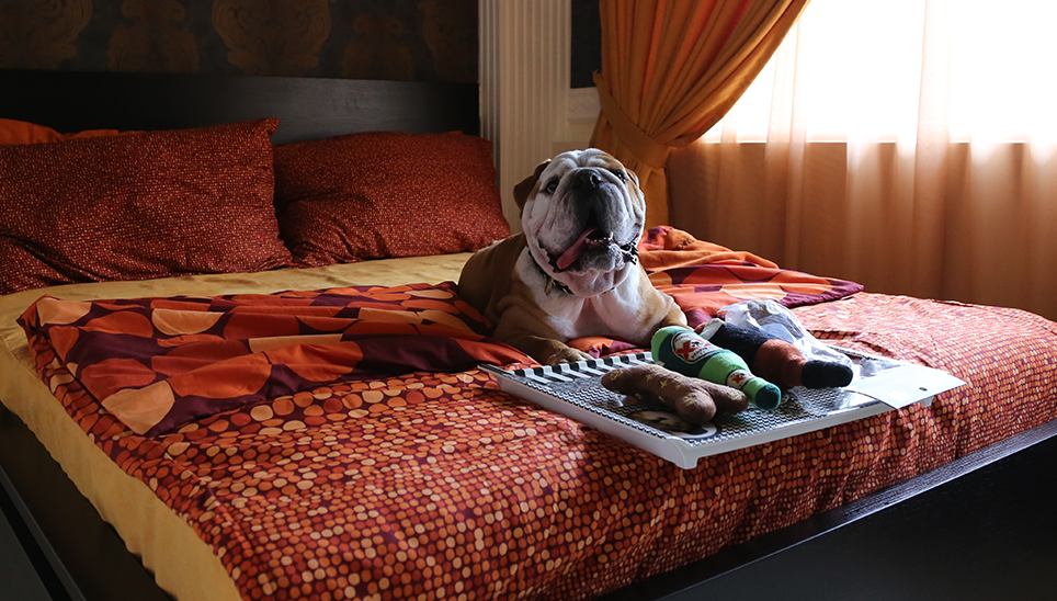 Dogs-birthday-venues-venuerific-blog-wagington-dog-on-bed