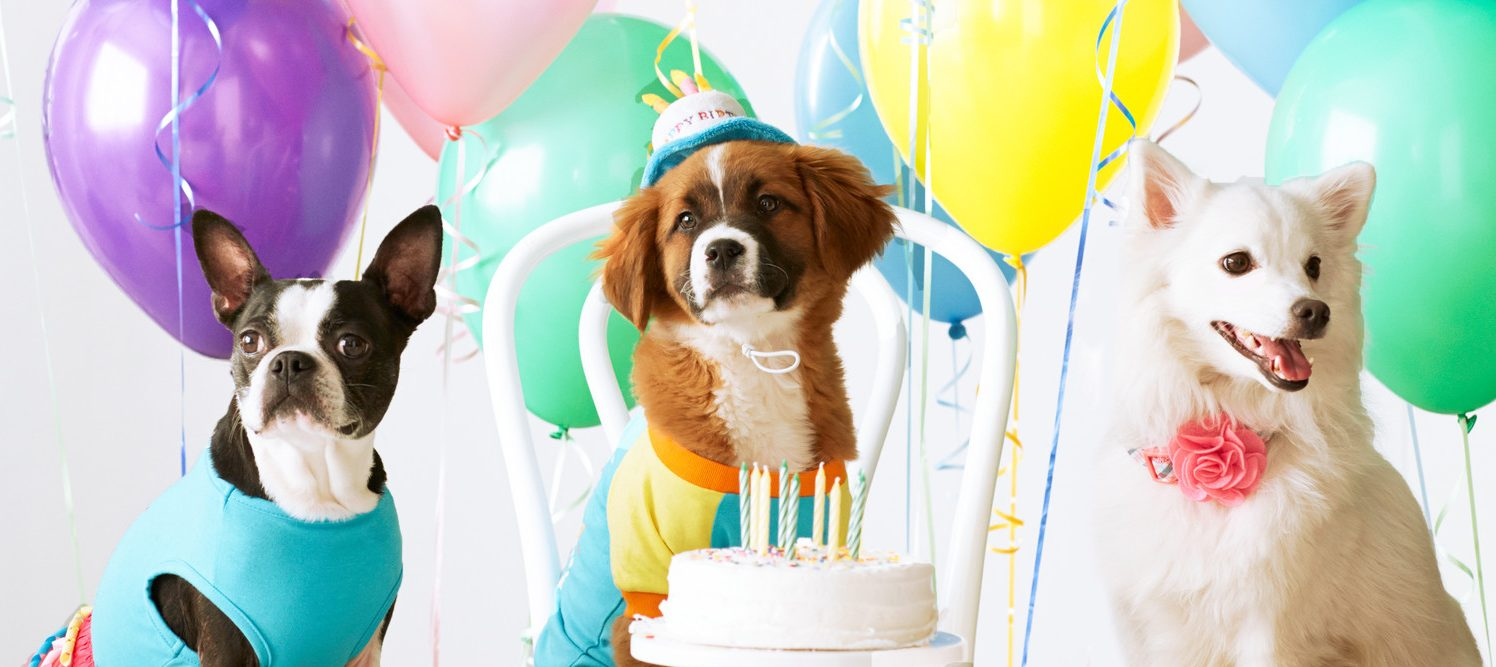 Most Creative Ways & Venues to Celebrate Your Pet Dog's Birthday in Singapore!