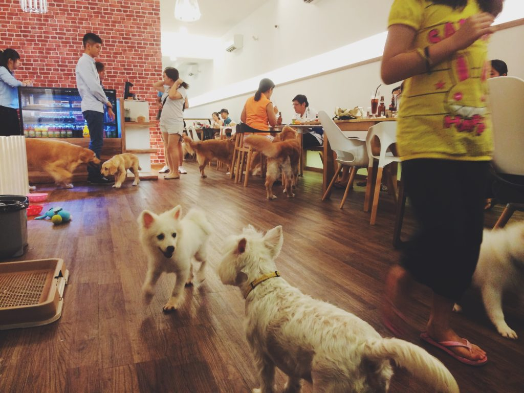 Dogs-birthday-venues-venuerific-blog-happenstance-cafe