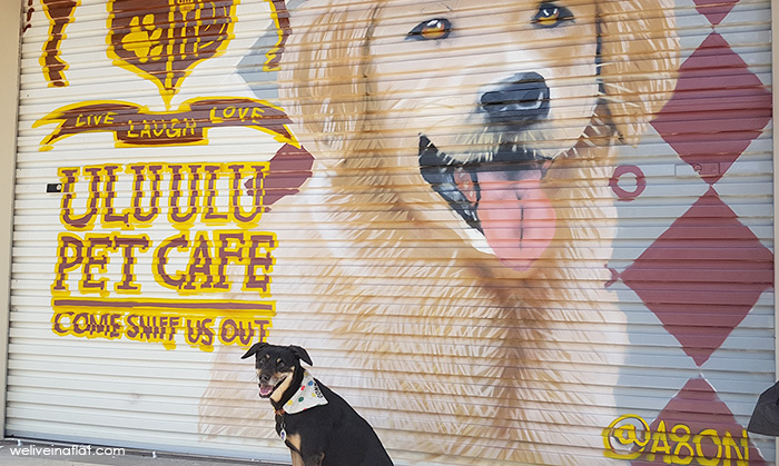 Dogs-birthday-venues-venuerific-blog-ulu-pet-cafe-black-dog