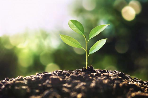 save environment save tree
