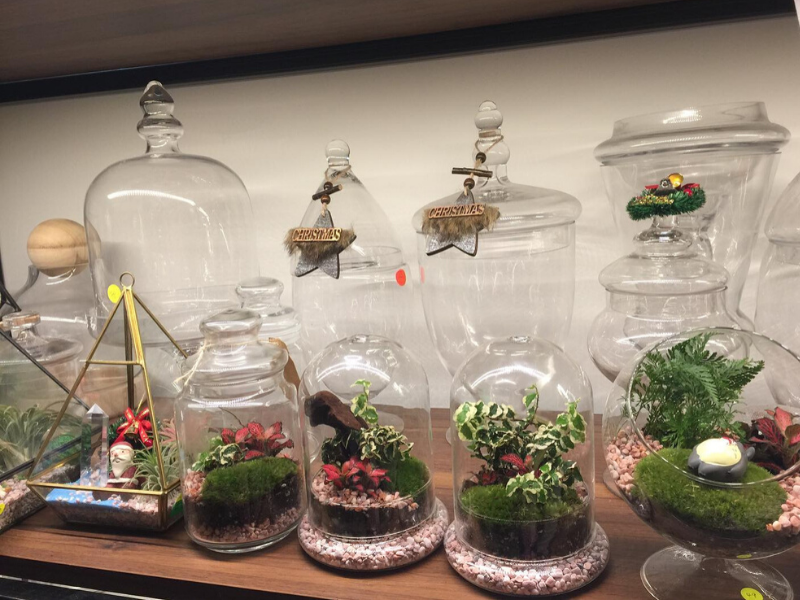 sustainable terrariums at love in a bottle